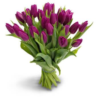 Lilla tulipaner