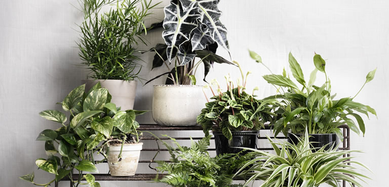 Green and blooming plants are lasting gifts