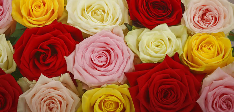 Valentine's Day Favourites