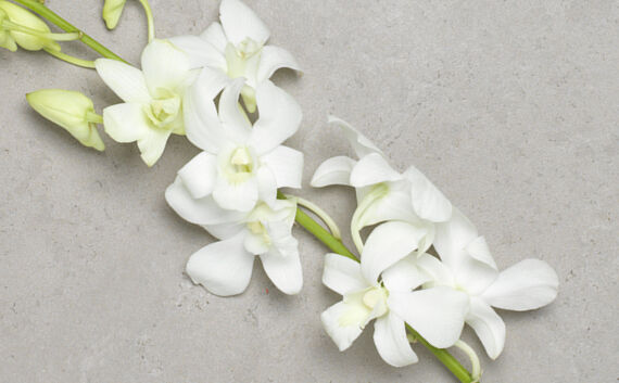 Blomster til kondolence