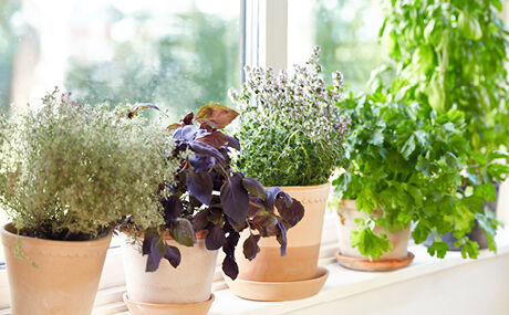 Planter og lys
