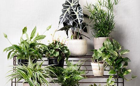 vanding af planter