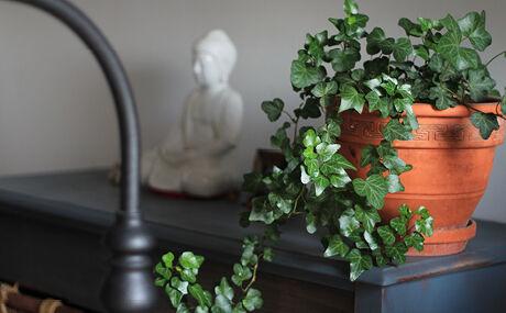 Grøn plante