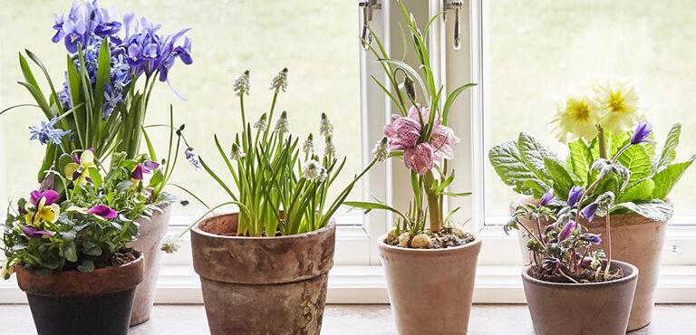 Guide til pasning af stueplanter