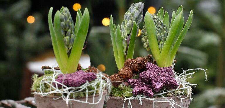 Julens planter