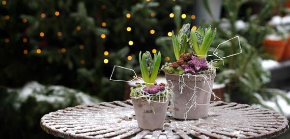 Christmas arrangements
